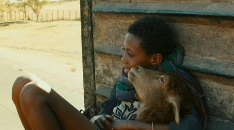 Lamb (Ethiopian Movie)